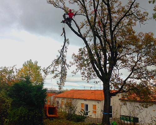 entreprise d'abbatage d'arbres