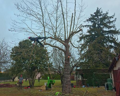démontage d'arbres en haute garonne