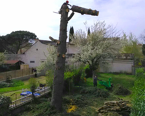 Entreprise démontage d'arbres région de Toulouse