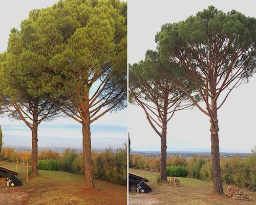Entreprise de taille d'arbre à Toulouse